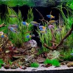 These 7 Prettiest Fish for Freshwater Aquariums Will Catch Your Fancy